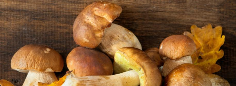 Nuova Due P82 - Fresh, dried and frozen porcini mushrooms